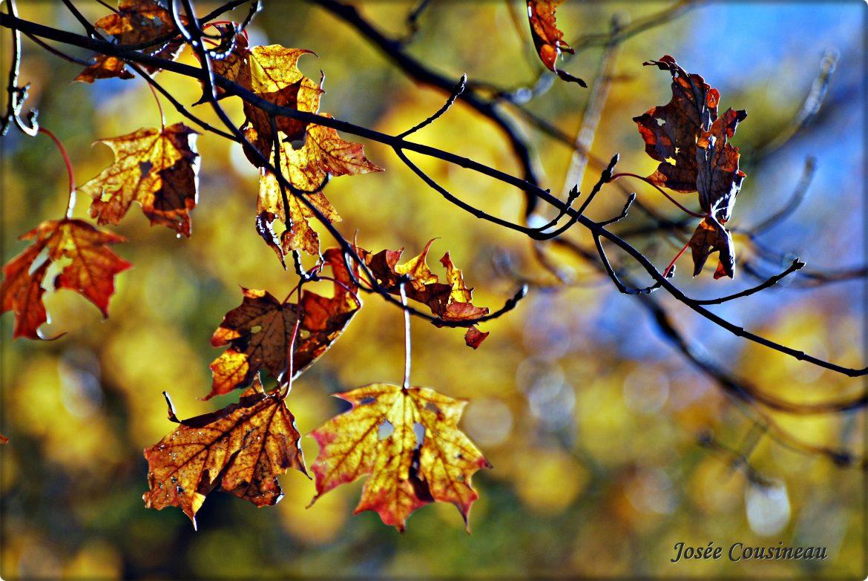 Mes neuf raisons d'aimer l'automne
