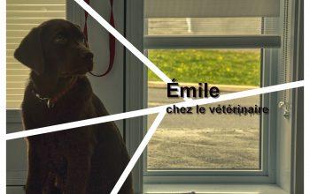Émile chez le vétérinaire
