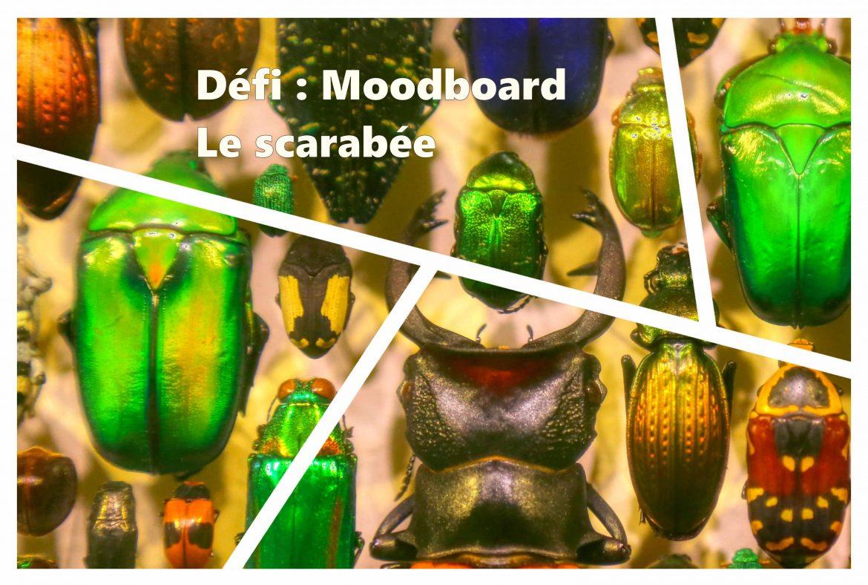 Moodboard le scarabée